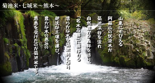 熊本県産米